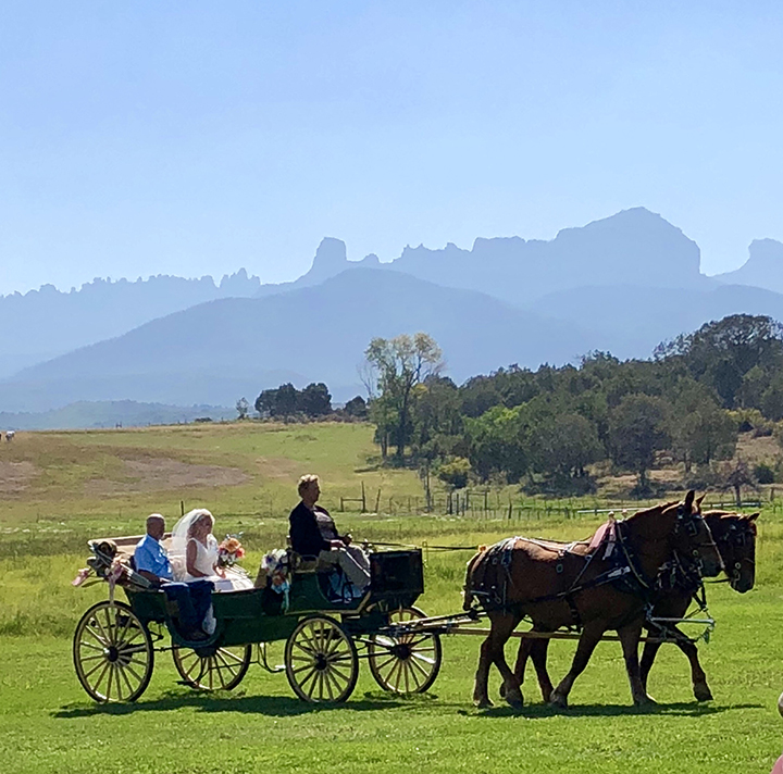 Y Bar Hitch   Horse and carriage transportation service in Loma, Colorado featured on WED West Slope - a directory for wedding vendors.